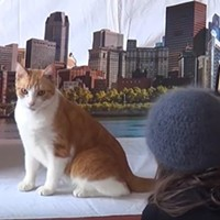 Behind-the-scenes video of City Paper's cat cover