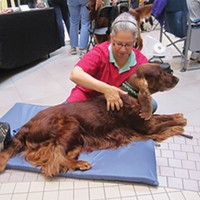 Pittsburgh dog massager offers comfort and relief to the four-legged set