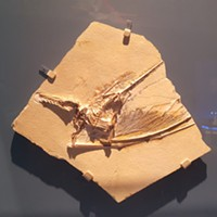 New Pterosaur exhibit brings world-class fossils, casts to Pittsburgh