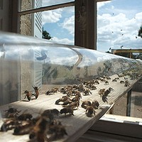 <i>All Around Us</i>, at Wood Street Galleries, explores our relationship with insects