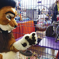 A furry checks out adoptable kittens at Anthrocon.