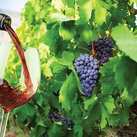 Back to the old school with natural wine