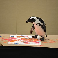 A Penguin painting