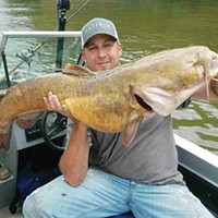 Flathead catfish are an impressive predator in Pittsburgh's rivers