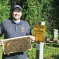 Honey-bee swarms are key to fighting population decline
