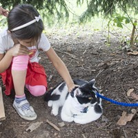 First Caturday Pittsburgh brings cats on leashes to Schenley Park