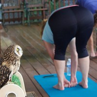 Humane Animal Rescue pairs yoga with owls