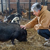 Angel Eyes Farm adopts out pigs, turkeys and chickens