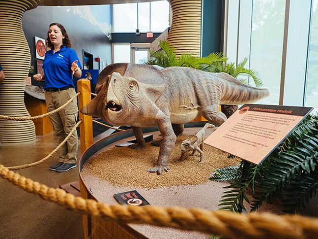 A model of a Protoceratops - CP PHOTO: JARED MURPHY