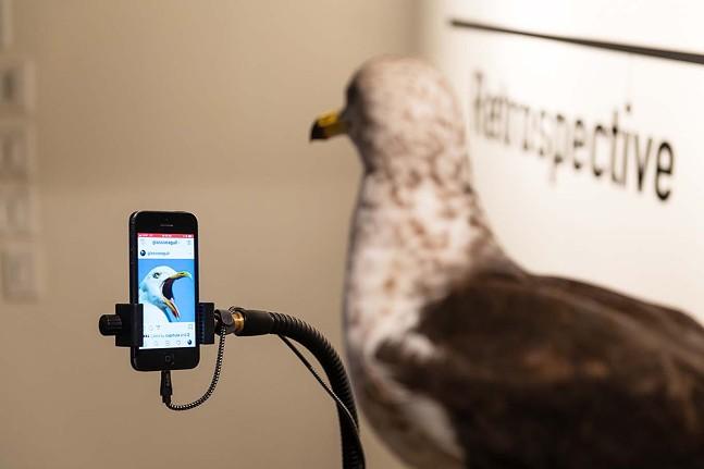 """Joshua Reiman's """"#glassseagull"""" - NATHAN J. SHAULIS/PORTER LOVES PHOTOGRAPHY"""