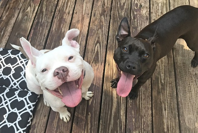 Hello Bully rescues Professor Stanford P. Marshmallow (L) and Batgirl (R) - PHOTO: HELLO BULLY