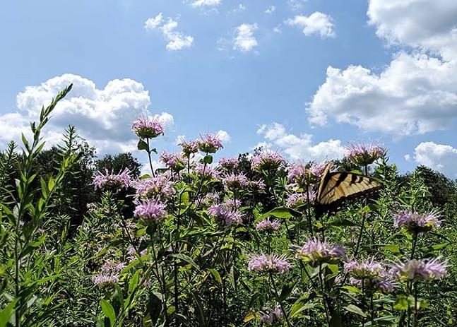 Pittsburgh Botanic Garden - CP PHOTO: LISA CUNNINGHAM