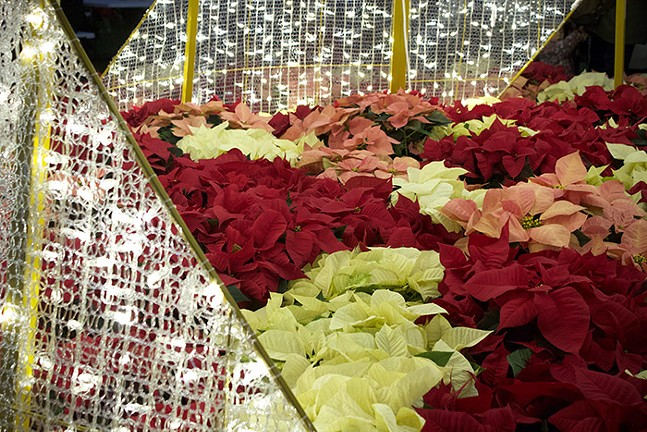 Poinsettias fill the interior of the Lumaze Christmas tree. - CP PHOTO: JOIE KNOUSE