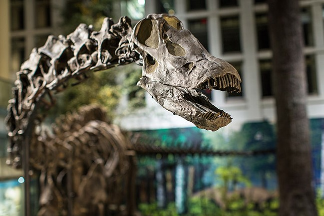 Dippy the Dinosaur - JOSH FRANZOS