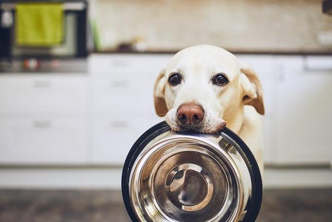dog-food-pandemic.jpg.jpg