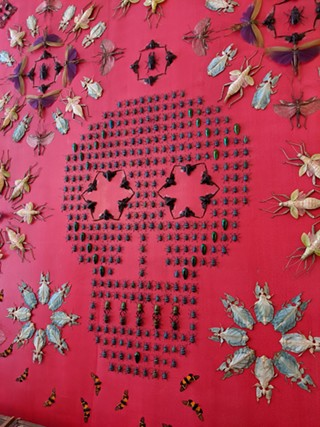 Bug wall, part of The Museum of All Things by Jennifer Angus, now at the Mattress Factory