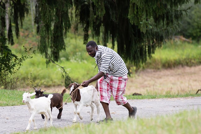 Abdulkadir Chirambo leads baby goats across a cobblestone driveway at his Mwanakuche Farm - in Mercer County. There are currently 35 sheep and four goats on the 13.5 acre property. - PHOTO: BRIAN COOK