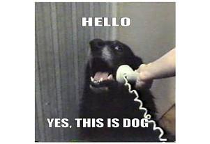 tweet_hellothisisdog.jpg