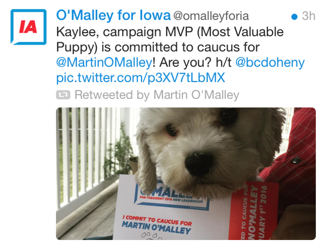 omalley_dog.png