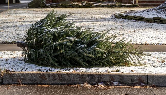 recycle_tree.jpg