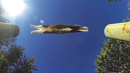 """""""Purrkour: Didga the Parkour Cat,"""" by CATMANTOO"""