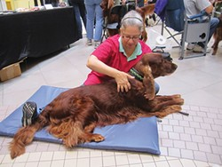 Dog massager Raylene Hoover at work - PHOTO COURTESY OF RAYLENE HOOVER