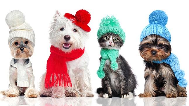 winter-guide-pittsburgh-pets-gear.jpg