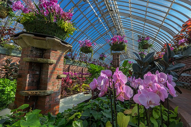 Orchid and Tropical Bonsai Show: A Splash of Brilliance at Phipps Conservatory and Botanical Gardens - PHOTO: PAUL G. WIEGMAN