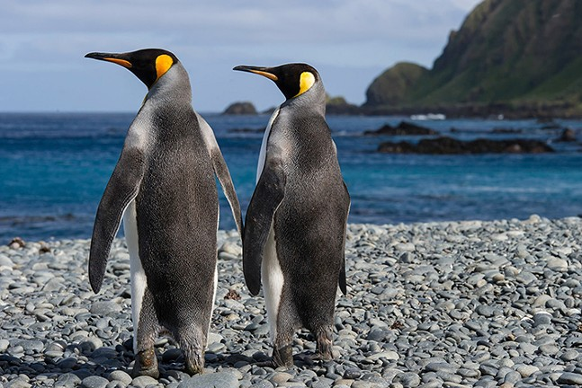 Every Penguin in the World, see Sat., Feb. 20 - PHOTO: PITTSBURGH ZOO AND PPG AQUARIUM
