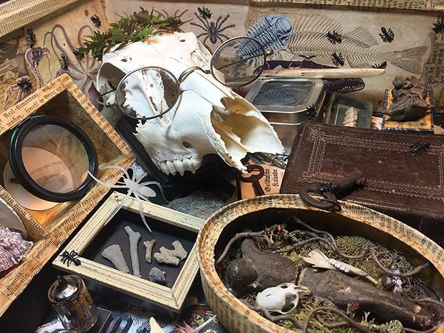 Cabinet of Curiosities in the Irma Freeman Center foyer - PHOTO: DIANE KEANE