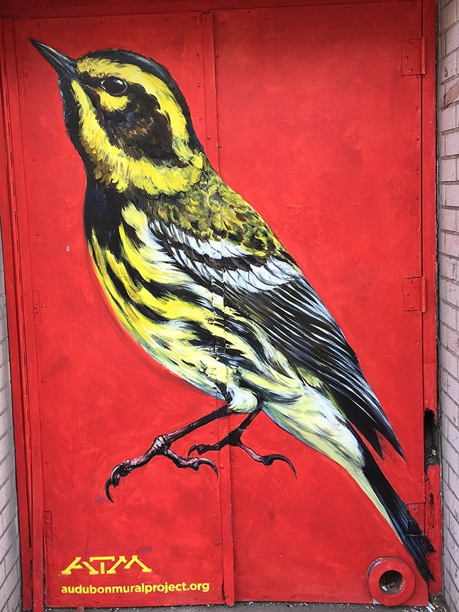 Mural of a Townsend's Warbler, part of the Audubon Mural Project in NYC - PHOTO: LEIGH HALLINGBY