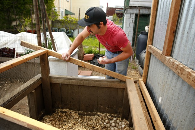 Ben checks on the duck eggs before removing some to give away to neighbors. - CP PHOTO: JARED WICKERHAM