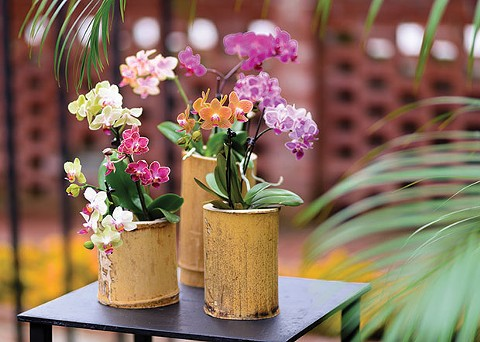 Orchid and Tropical Bonsai show at Phipps Conservatory - PHOTO COURTESY OF PAUL G. WEIGMAN