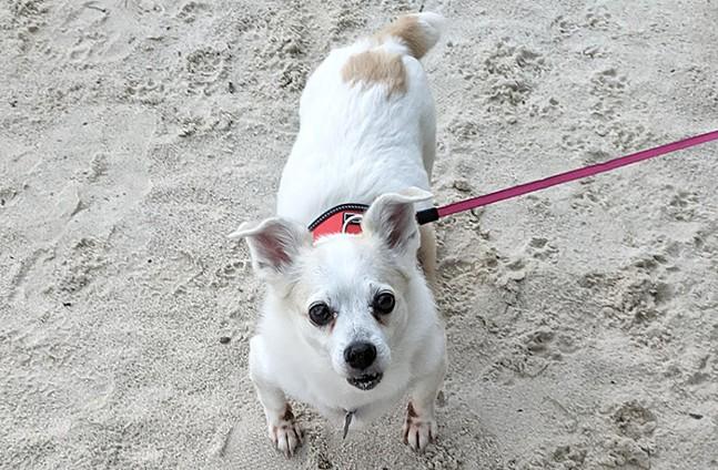 Villanelle, the rescue dog - CP PHOTO: AMANDA WALTZ