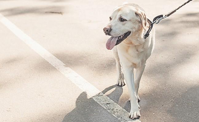 dog-walking-returning-to-work-pandemic.jpg