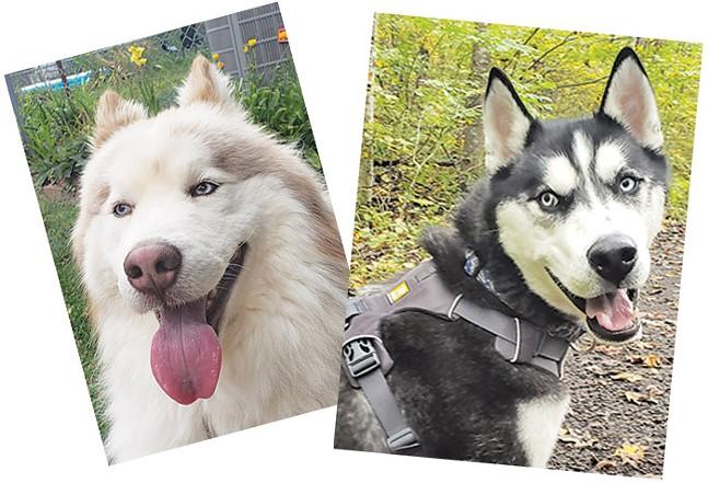 Sebastian's foster dogs Diesel and Max - PHOTOS: SEBASTIAN FOLTZ
