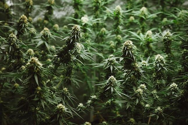 weed-web.jpg