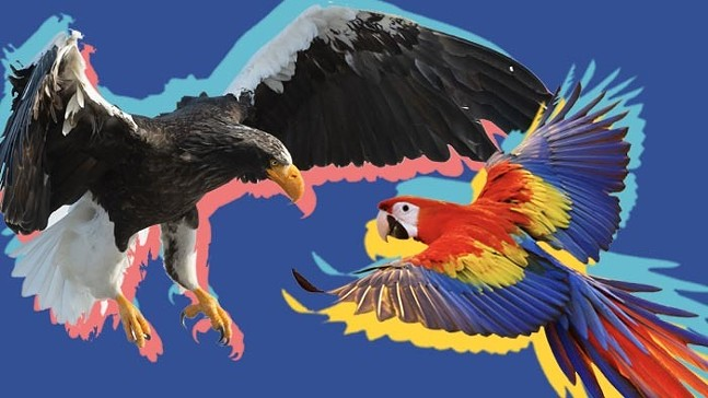 A Steller's Sea Eagle and scarlet macaw