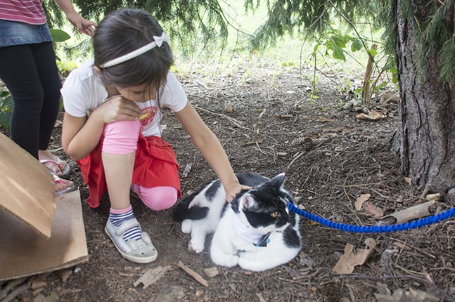 Frisky Lincoln at First Caturday Pittsburgh on Sat., Aug. 5 - CP PHOTOS BY JORDAN MILLER