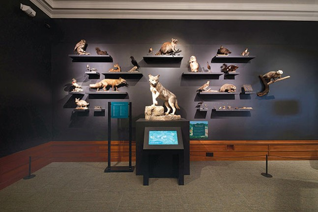 Taxidermied urban critters help illustrate We Are Nature at the Carnegie Museum of Natural History. - PHOTO COURTESY OF JOSHUA FRANZOS