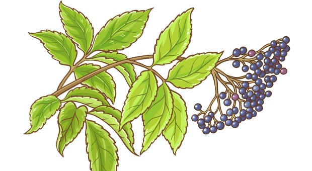 An herbalist returns home to talk about Appalachian remedies