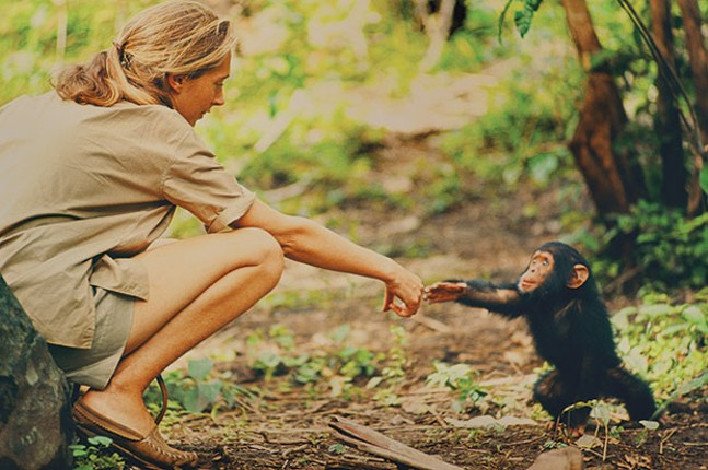 Jane Goodall, in Gombe