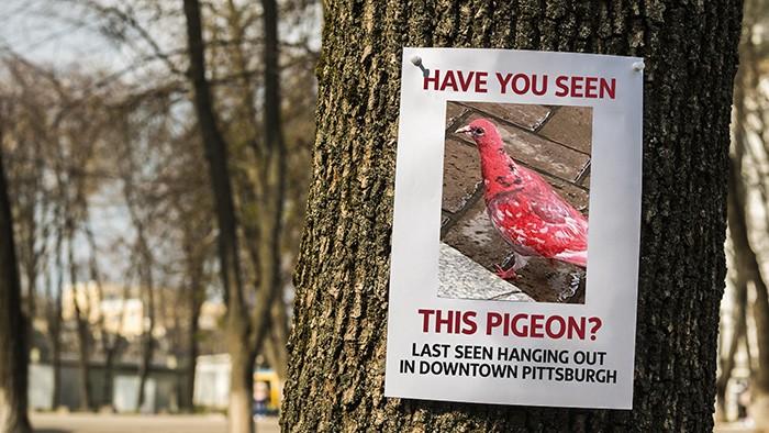 pigeonsign.jpg
