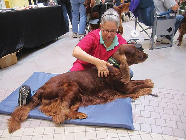Dog massager Raylene Hoover at work - PHOTO COURTESY OF RAYLENE HOOVER