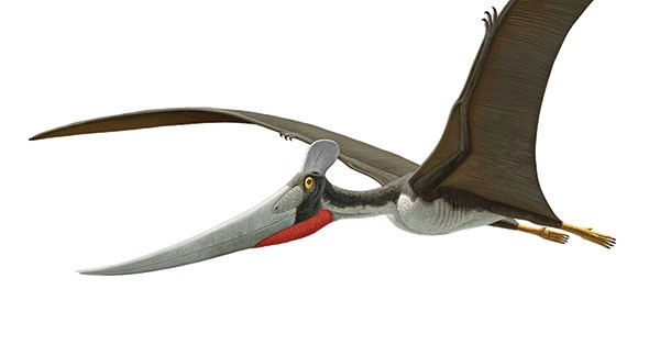 sl_pterosaurs_04.jpg