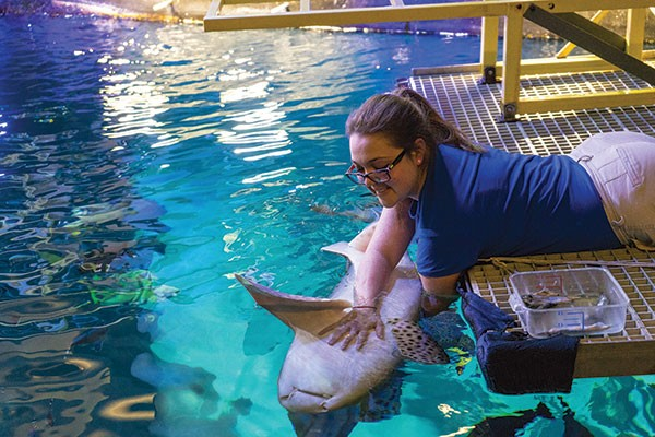Pittsburgh Zoo aquarist Ariella Wiener checks out a resident of the PPG Aquarium. Wiener is able to use techniques developed at the zoo to communicate with the animals.