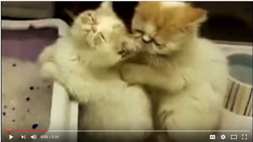 Yes, these kittens are in a political attack ad against Republican U.S.  Sen. Pat Toomey of Pennsylvania. - IMAGE COURTESY OF YOUTUBE.COM
