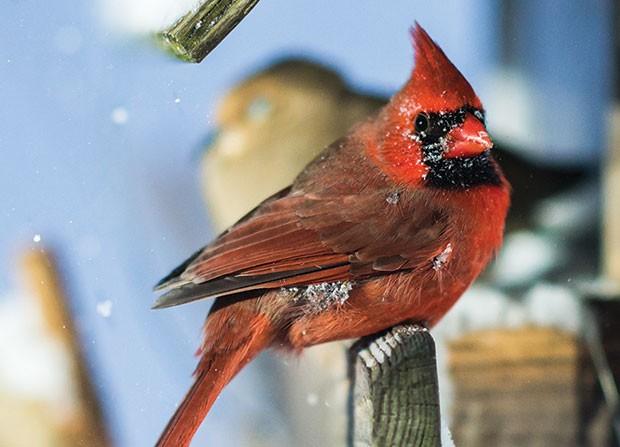 sl_birdcounth_50.jpg