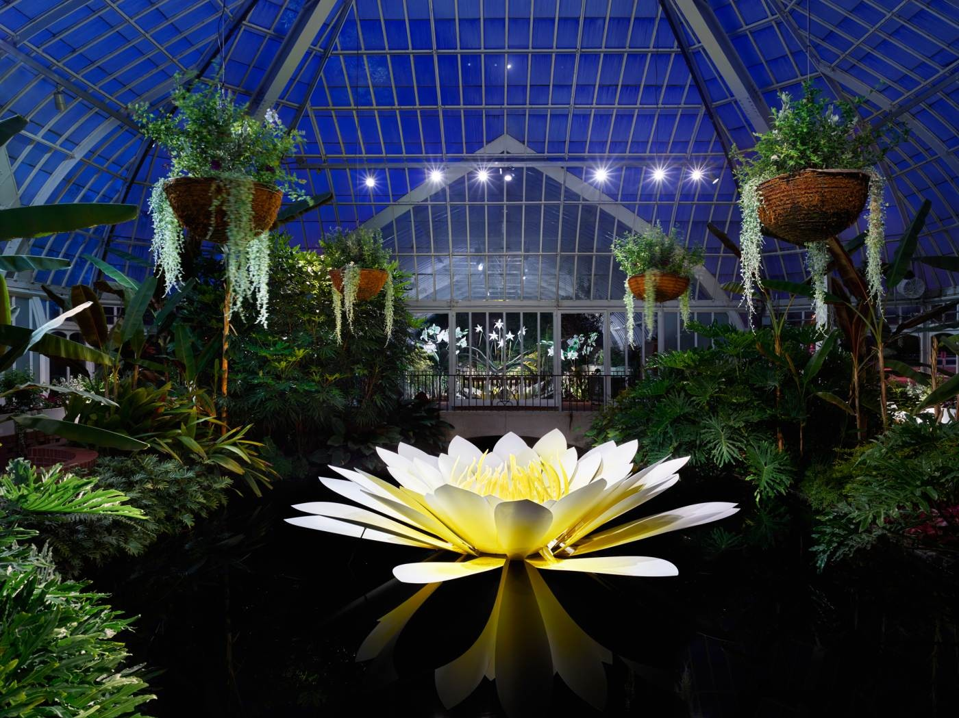 Phipps conservatory lights up the night with extended hours for massery photography inc mightylinksfo