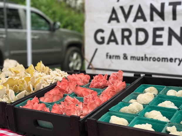 Lions mane mushrooms along with pink and yellow oyster mushrooms at market - PHOTO COURTESY OF AVANT GARDENS FARM & MUSHROOMERY